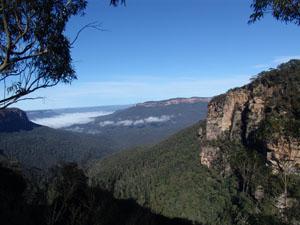 Eukalyptuswälder soweit das Auge reicht: in den Blue Mountains.
