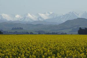 Von Christchurch aus nach Westen: die Southern Alps am Horizont. Foto: Kathrin Schierl