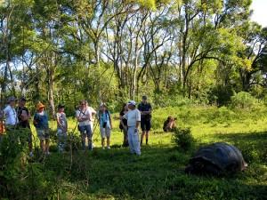 Riesenschildkröten gaben den Galapagosinseln ihren Namen.