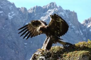 Auf Wanderungen durch Österreich warten immer wieder beeindruckende Begegnungen mit der Natur. Foto: hall-wattens.at / OttoLeiner
