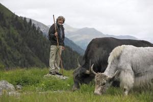 Reinhold Messner führt seine Yaks jedes Jahr im Juni auf ihre Sommerweide im Vinschgau oberhalb von Sulden am Ortler. - Foto: Vinschgau Marketing/Frieder Blickle