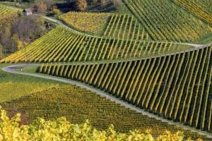 Die Weinland-Steiermark-Radtour verläuft auf bereits bestehenden Wegen, die bis Juni neu vernetzt und einheitlich beschildert werden. - Foto: Steiermark Tourismus / Harry Schiffer