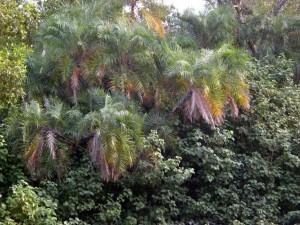 Natur in den Sundarbans.