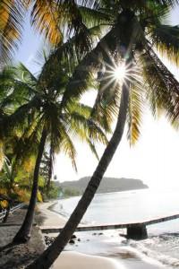 Auf der Insel findet man ein paar sehr schöne Strände, die alles andere als überlaufen sind, denn die Touristen kommen weniger zum Beachen nach Dominica.