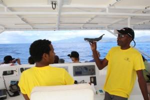 Whale Watching Touren sind mittlerweile ein beliebtes touristisches Angebot auf Dominica.