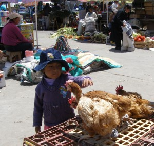 Ein kleines Mädchen wagt sich zaghaft an ein arg gerupftes Hühnchen.