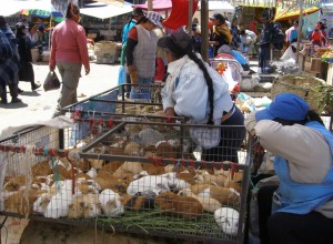 Meerschweinchen gelten als Delikatesse und werden auf jedem Markt gehandelt.