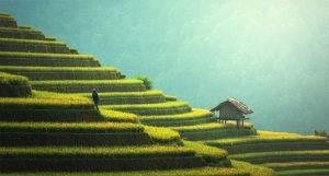 Reiseterrassen in China. Foto; pixabay.com / sasint