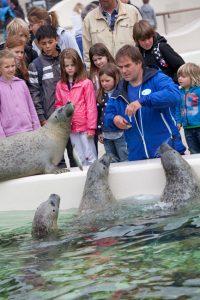 Im Naturkundemuseum Ecomare mit seinem Auffangzentrum für Seehunde kann man viel über die Natur auf Texel lernen.