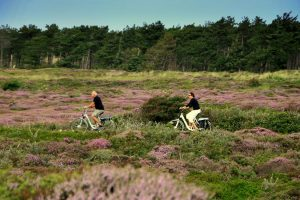 Das Wattengebiet ist das größte Naturgebiet der Niederlande und beherbergt mit dem Wattenmeer eine beispiellose Wildnis. Unter Einfluss von Ebbe und Flut verändern sich Natur und Landschaft fortwährend. Die besonderen Pflanzen und Tiere, die hier gedeihen, sind durch die speziellen Umstände sowohl kräftig als auch sehr verletzbar.
