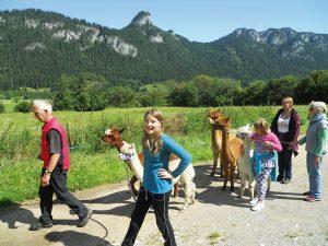 Familienwandung mit Alpakas – für Groß und Klein ein besonderes Erlebnis. - Foto: Franz Trenkle