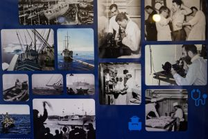 Eine Fotowand gibt staunenden Touristen Einblick in die raue Welt des Stockfisch-Fangs.