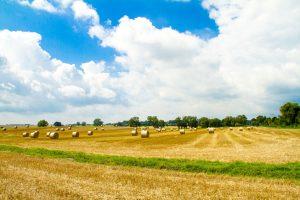 Abgemähtes Getreidefeld bei Gummlin; das Dorf befindet sich am Stettiner Haff. - Foto: Usedom Tourismus GmbH / Andreas Dumke