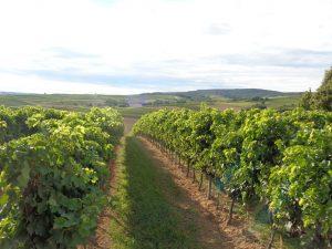 Der Weinanbau hat den Winzern Wohlstand gebracht. - Foto: Dieter Warnick