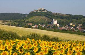 Die Burgruine in Falkenstein ist weithin sichtbar. Von dort oben aus hat man eine herrliche Aussicht. - Foto: Weinviertel Tourismus / Mödl