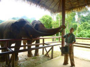 Auch Elefanten sind hungrig. – Foto: Anke Sieker