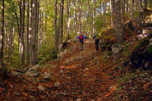 Beim Trekking kommt es vor allem auch auf die richtige Kleidung an. Foto: pcdazero / pixabay