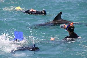 Nur 13 Schnorchler dürfen zu den Delfinen ins Wasser. Foto: Dennis Buurman