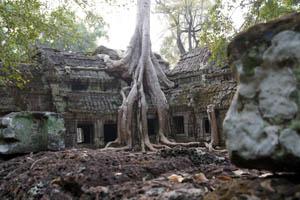 Im Kampf mit dem Dschungel: Ta Prohm