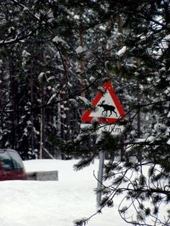 Vorsicht, querende Elche. Hinweisschilder dieser Art gehören in Norwegen zum Alltag im Straßenverkehr.
