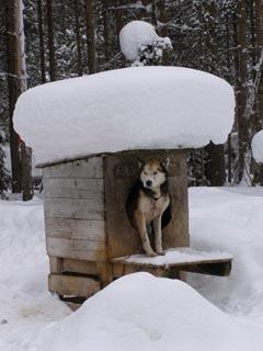 Auch Schlittenhunde brauchen ab und zu mal eine Pause.
