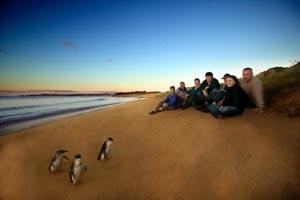 Im Vorgarten der Pinguine.