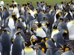 Rund 1000 Tiere leben am Volunteer Point.
