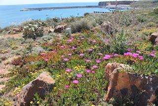 Blütenpracht im Naturpark Capo Vincente: Kräftige Farben, herrliche Düfte. Foto: Heiner Sieger