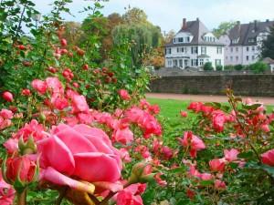 Der Ulmer Rosengarten. Foto: Tourismus Ulm