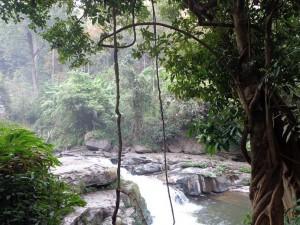 Doi Suthep / Doi Pui National Park