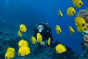Traumhafte Wasserwelt auf den Malediven.