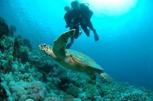 Auge in Auge mit einer Meeresschildkröte.