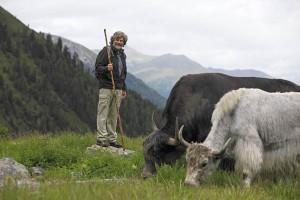 Reinhold Messner begleitet seine tibetischen Yaks jedes Jahr Ende Juni auf die Sommerweide im Ortlergebiet im Vinschgau. - Foto: Vinschgau Marketing/Frieder Blickle