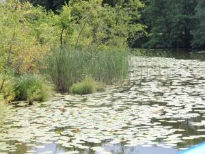 Mit dem Boot durch unberührte Natur schippern – in der Uckermark ist dies problemlos möglich.