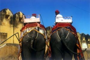 Auf Elefanten unterwegs. Foto: Christian Wolter
