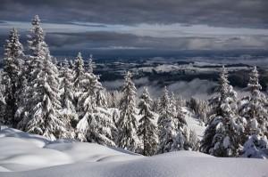 Wie Puderzucker glitzert der frisch gefallene Schnee auf den Flächen rund um den Gäggersteg.