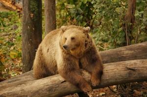 Bern - Heimat der Bären.