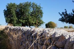 : Immer wieder trifft man auf Trockenmauern. Das Mauerwerk besteht aus Natursteinen ohne Mörtel.