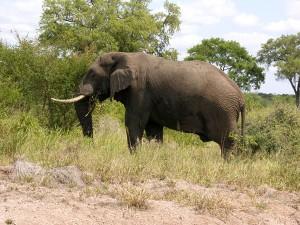 Elefanten gibt es fast sicher zu sehen.