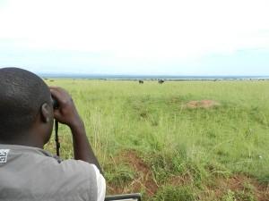 Höhepunkt einer jeden Südafrika-Reise ist eine Safari.