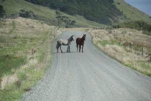 Tierische Straßenblockade.