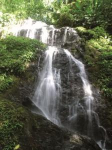 Suriname lockt mit einem Urlaub in unberührter Natur. - Foto: Tourism Foundation Suriname