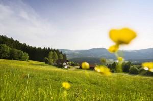 Vorbei geht es an Obstbäumen und herrlichen Blumenwiesen. - Foto: Toursimusverband Ostbayern