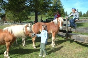 Zutraulich: Haflinger Pferde auf dem Salten. - Foto: Tourismusverein Jenesien