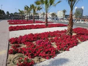 Auch das ist Dubai: Jedes Blumenbeet wird mit großem Aufwand bewässert. - Foto: Dieter Warnick