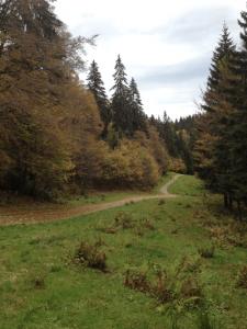 Im Schwarzwald gibt es viele schöne Wanderwege. Foto: privat