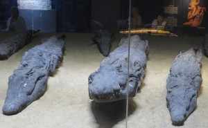Krokodilsmumien. Fotos: Gisela Marzin