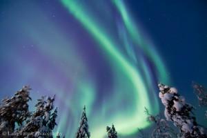 Die Aurora Borealis färbt den wolkenlosen Himmel über dem Urho Kekkonen Nationalpark grün.