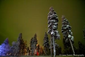 Der Wald in Kakslauttanen wird von den grellen Lichtern der Schneemobile, die schnell durch den Wald rasen, rot beleuchtet