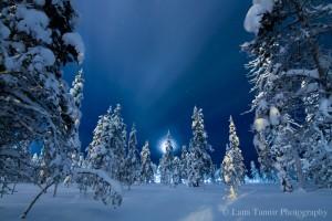 Der Vollmond in Saariselkä lässt den Mitternachtshimmel und die Tannen erleuchten.